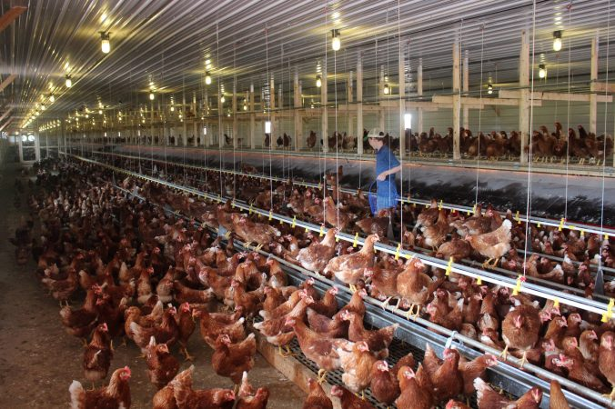 https://www.npr.org/sections/thesalt/2015/12/30/461483821/the-year-in-eggs-everyones-going-cage-free-except-supermarkets